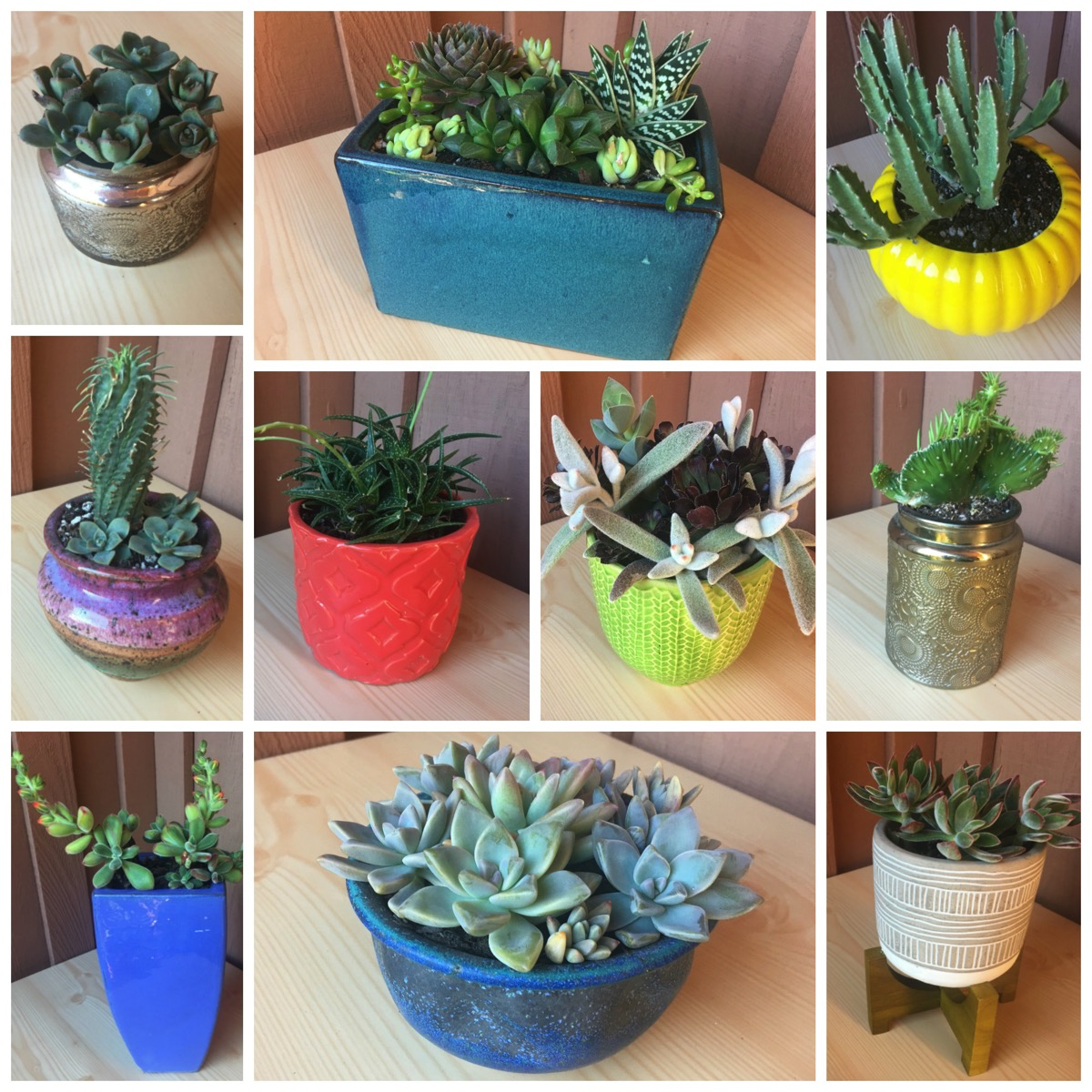 Garden Tips Succulent And Cactus Pot Planting Ideas For Your Home