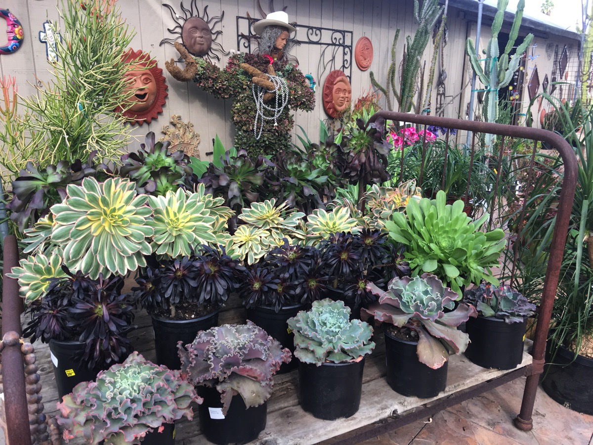 Our Trip to Green Thumb Nursery in San Marcos, Discover Unique Pots for Plants, Garden Decor and More!