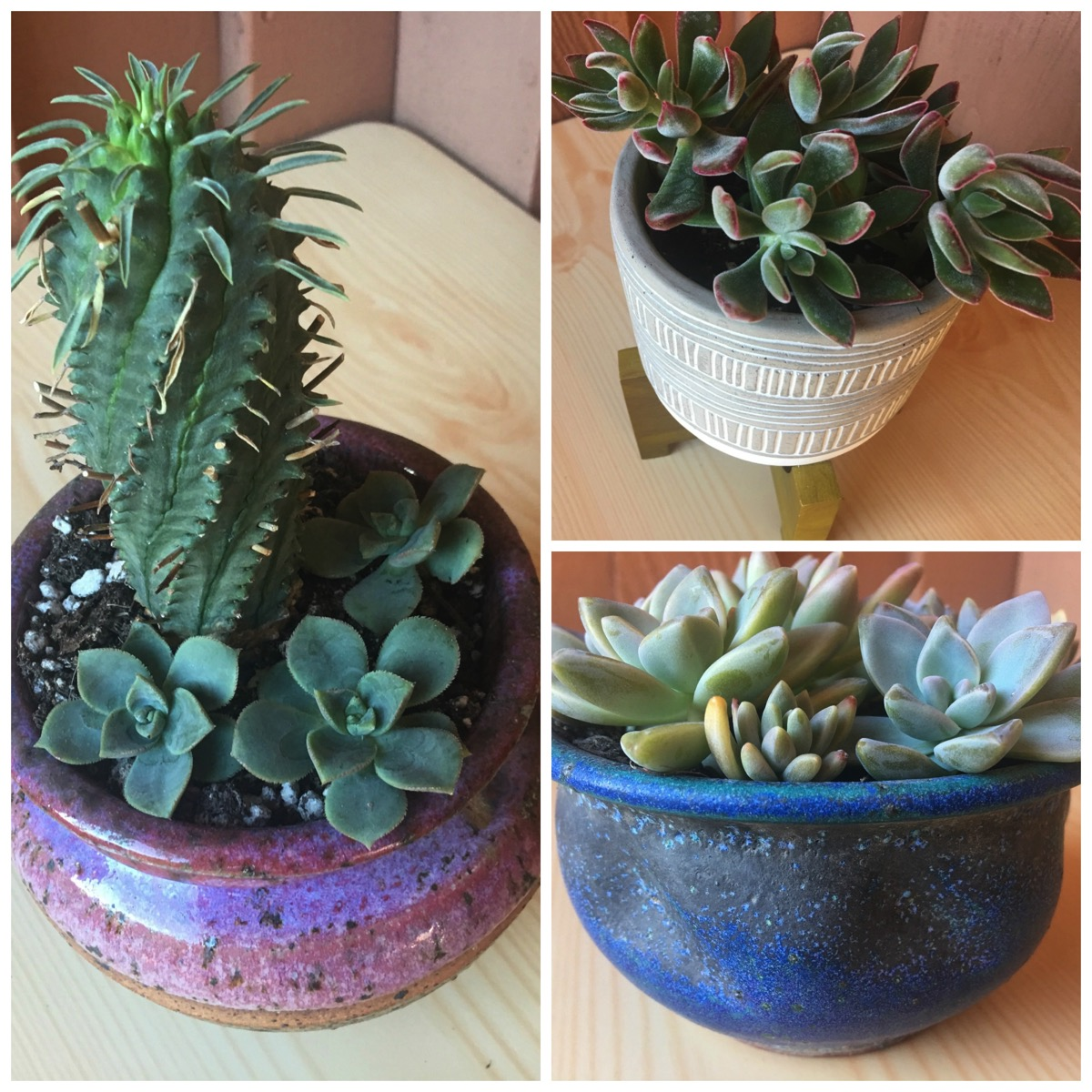 Cactus and succulent pots from dig and hang