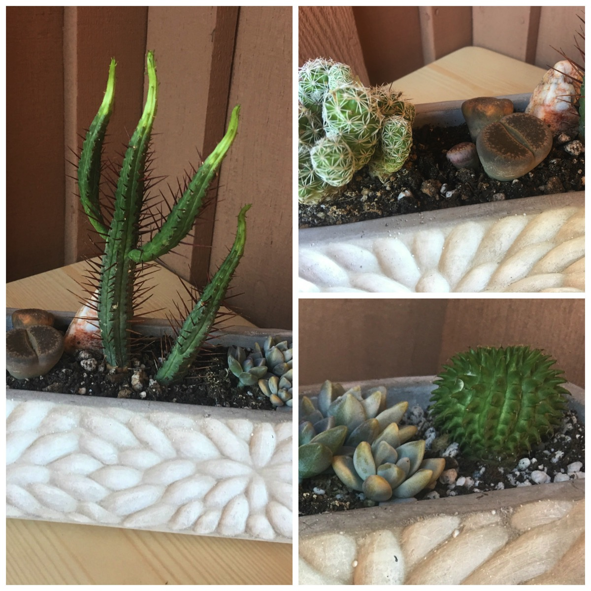 Long succulent planter for home anthroplogy