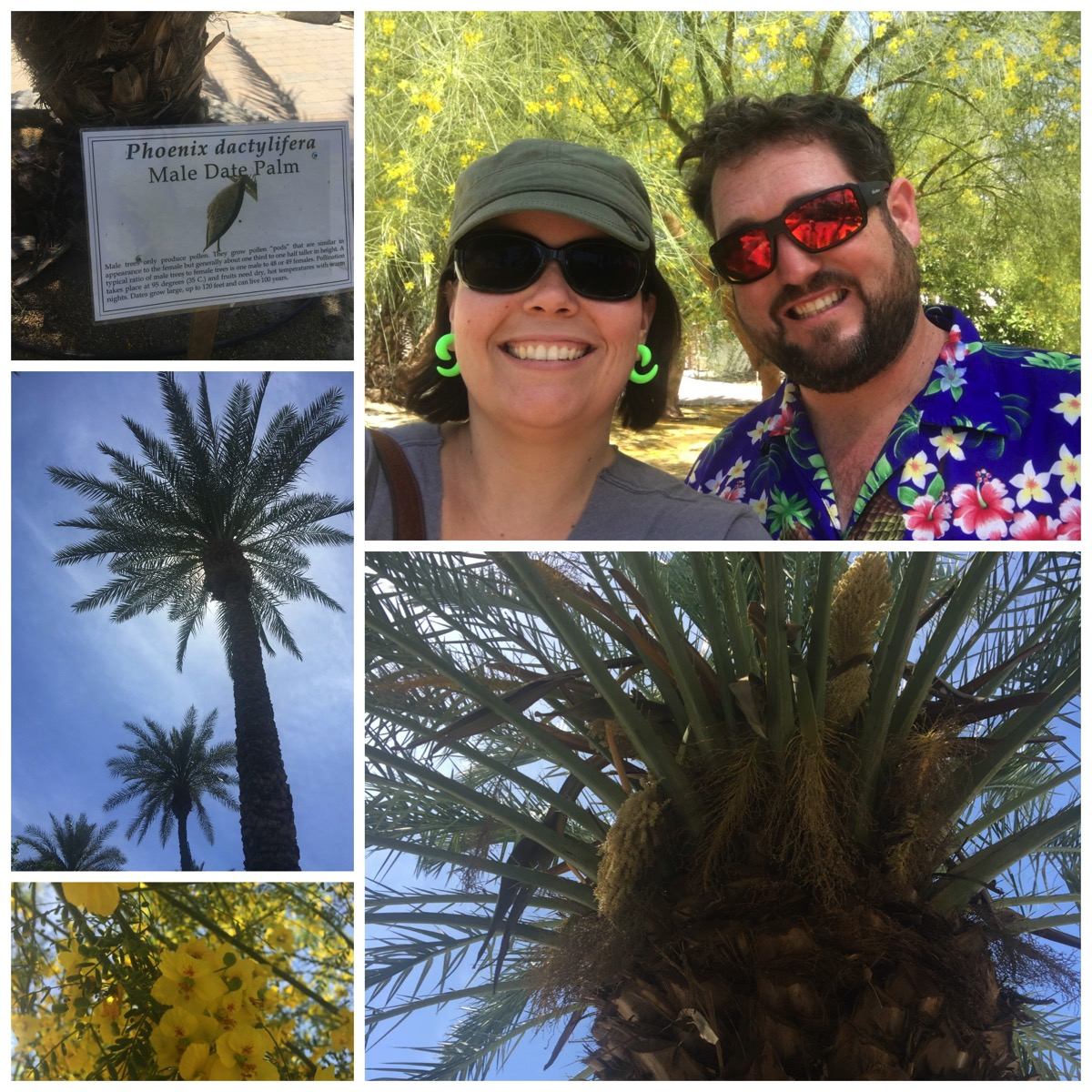 Shields date palm farm palm springs california indio