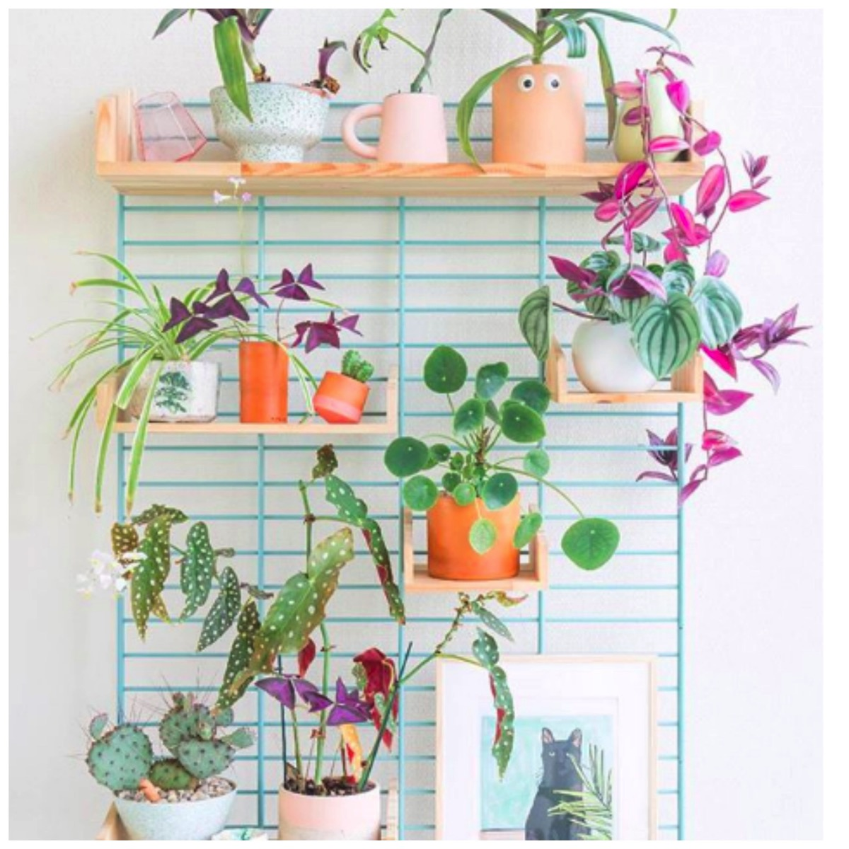Colorful and fun modern plant shelf for home
