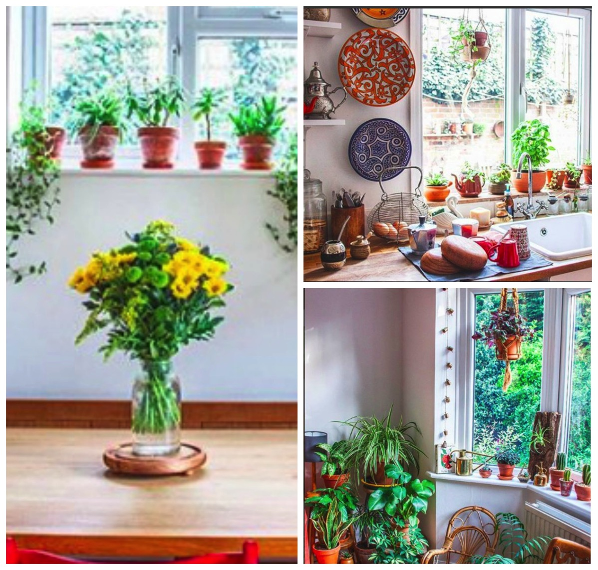 Beautiful plants and windows in boho home of Frida Florentina